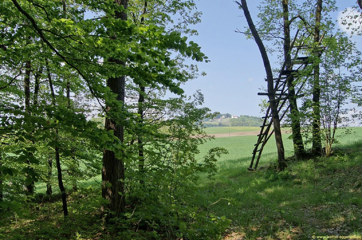 Auch die wälder glänzten förmlich von den frischen trieben und